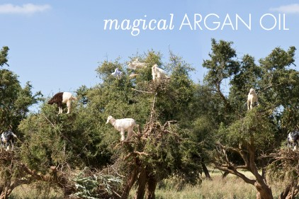 vickerey-argan-oil-goats
